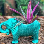 My Cute Elephant | Earthly Creations Terracotta Planter | RougePouts